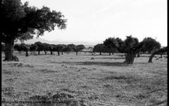 Dehesa-Salamanca