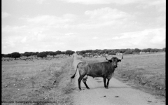 Wild-Dehesa Salamanca